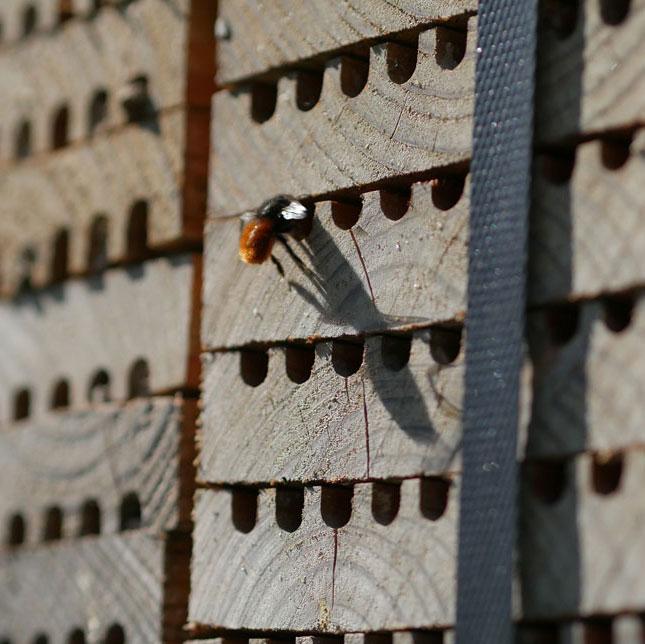 Die Mauerbienen